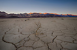 California, Southeast, Death Valley National Park, Furnace Creek. Last light and a dead sagebrush in dry cracked mud on Badwater Basin Road in November.