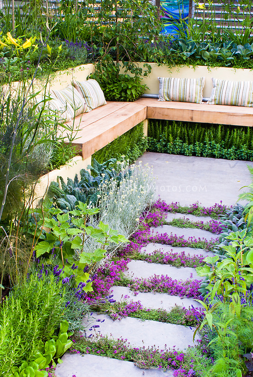 Thyme herbs in flower Thymus, in crevices and nooks and crannies of path stepping stones walkway with herbs and lettuce vegetables: rosemary Rosmarinus, Salvia officinalis, Lavandula lavender, dill, kale, patio, Garden benches with pillow cushions in edible landscape