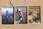 2x3 photo magnets of gray whales, brown pelican and elephant seals