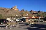 Donkeys in Oatman in February