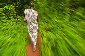 Monkey priest walking through forest, Boabeng-Fiema Monkey Sanctuary, Ghana