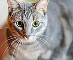 Katie's Cat Portraits