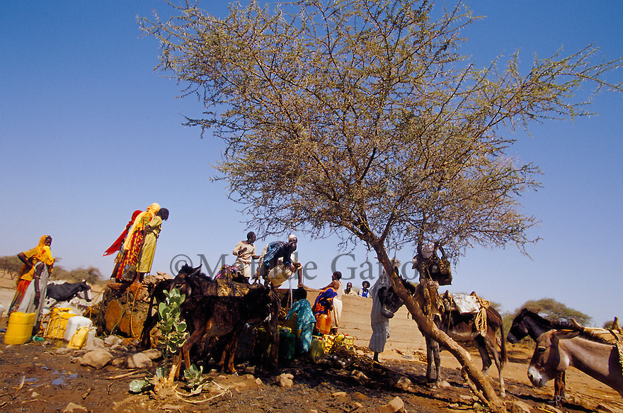 Eritrea - Gash Barka - Villagers collecting water from the nearest well. As a result of 30 years of war for independence against Ethiopia (from 1961 to 1991) and another 3 years from 1997 to 2000, there are 50,000 Eritreans currently living in internally displaced (IDP) camps throughout the country. These IDPs have fled three times in the last 10 years, each time because of renewed military conflict. They lived in relatives' homes when lucky enough, but mostly, the fled to the mountains, where they attempted to do what Eritreans do best, survive. Currently there is no Ethiopian occupation in Eritrea, but landmines prevent the IDPs from finally going home. .It is estimated that every Eritrean family lost two or three members to the war which makes the reality of the current emergency situation even more painful for Eritreans worldwide. Currently, the male population has been decreased dramatically, affecting the most fundamental socio-economic systems in the country. Among the refugee population, an overwhelming majority of families are female-headed, severely affecting agricultural production. For, IDPs in particular, 80% of households are female-headed..The unresolved border dispute with Ethiopia remains the most important drawback to Eritrea's socio-economic development, as national resources (human and material) continue to be prioritized for national defense. Eritrea is vulnerable to recurrent droughts and variable weather conditions with potentially negative effects on the 80 percent of the population that depend on agriculture and pastoralism as main sources of livelihood. The situation has been exacerbated by the unresolved border dispute, resulting in economic stagnation, lack of food security and increased susceptibility of the population to various ailments including communicable diseases and malnutrition..
