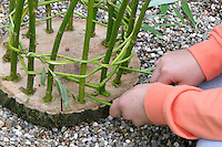 Mädchen flechtet, flicht aus Weidenzweigen einen Korb im Garten, Weide, Weiden, Basteln, Bastelei, Weidenkorb. 4. Schritt: dünnere Weidenzweige werden zwischen die etwas dickeren Weidenzweige geflochten