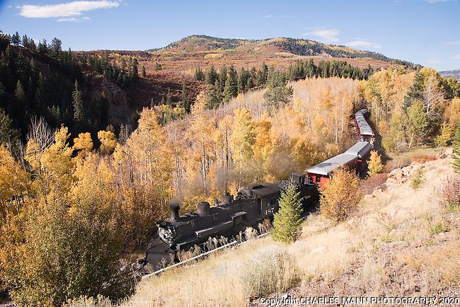 The Cumbres & Toltec steam railroad slides through an aspen grove as it returns from a autumn day's run near Chama, New Mexico
