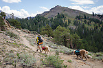 Backpacker and dogs (golden retrievers) on the Pacific Crest Trail, Toiyabe National Forest, California