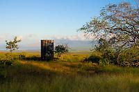 Water storage tank and kiawe (mesquite) tree, Upcountry Maui
