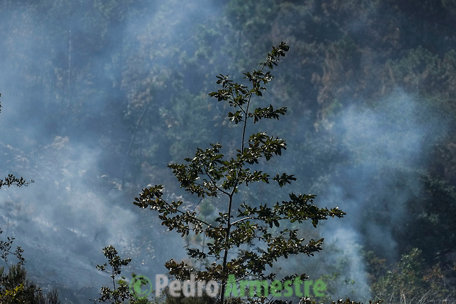 Smoke rises from smouldering debris after the passing of a wildfire in Molinos de O Folon, (O Rosal) near Pontevedra, on August 29, 2013. Spain is prone to forest fires in summer because of soaring temperatures, strong winds and dry vegetation. Last year wildfires destroyed some 150,000 hectares of land in Spain from January to July, after one of the driest winters on record. AFP PHOTO/ Pedro ARMESTRE