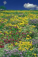 Monet wldflower meadow, Missouri, USA