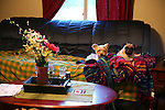 Duke (left) and Kitty (right) sit together on a couch during the afternoon on Friday, Oct. 11, 2013. Photo by Erin McLaughlin