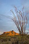 Pinkley Peak and ocotillo in Organ Pipe Cactus National Monument, Arizona