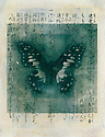 Mixed medium image of a butterfly with Japanese calligraphy.