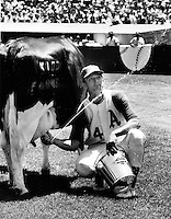 A's Phil Roof gives a squirt getting ready for the cow milking contest, one of Charlie Finley's promotions..photo Ron Riesterer.