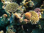 Récif de corail, Nouvelle-Calédonie