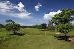 South America, Brazil, Pantanal. Grassland lanscape of the Caiman Ecological Reserve in the Pantanal.