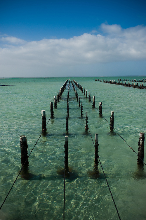 Coffin Bay Oyster Farm, South Australia