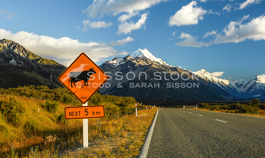 Cow warning sign on SH80 road to Aoraki Mt Cook, Canterbury New Zealand