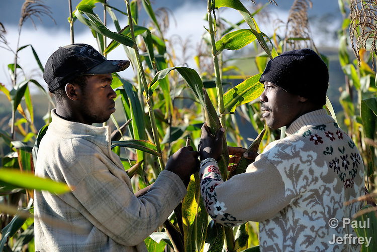 An agricultural advisor from the Lutheran World Federation (right) counsels a farmer in the Haitian village of Foret des Pins.