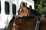 Horses are prepared for a four in hand coaching event in Locust, New Jersey.