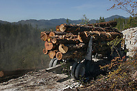 A logging truck hauls timber to a site where it will be shipped for processing.