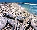 Driftwood and flotsam thrown up on to the beach. Bonaire, Dutch Antilles,