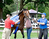 Girolamo give handlers fit during paddock schooling.