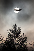 A private jet flies in front of the sphere of the sun above the silhouette of an evergreen tree.