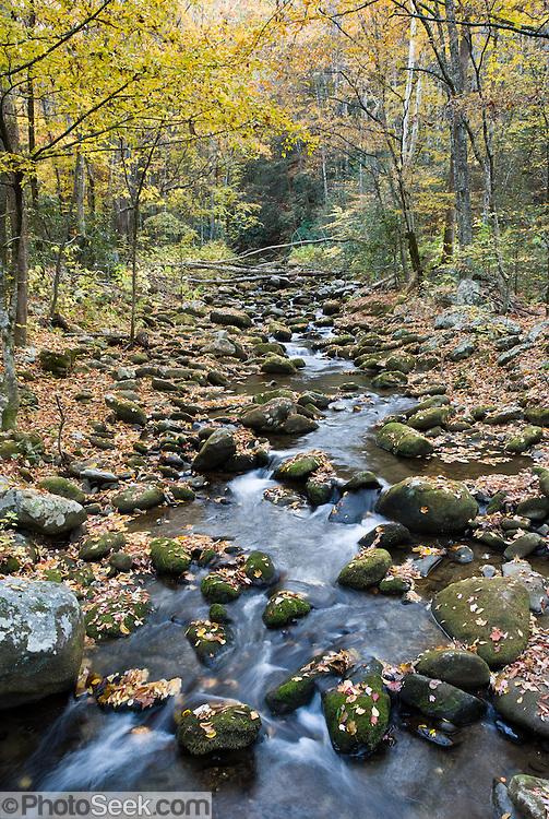 Stream roaring fork motor nature trail on tennessee side for Motor trails in gatlinburg tn