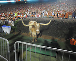 Texas mascot Bevo at Ole Miss vs. Texas at Vaught-Hemingway Stadium in Oxford, Miss. on Saturday, September 15, 2012. Texas won 66-21. Ole Miss falls to 2-1.