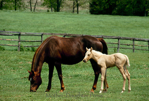 Foal Mother Mother And Foal in Green