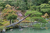 A pine tree hangs over the ornamental lake in the pond garden at Tenryu-ji Temple, Kyoto