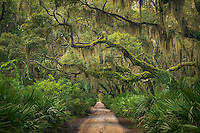 The main road through Cumberland Island leads through a beautiful maritime forest of oaks and palmetto, captured here in the soft light just after sunset.