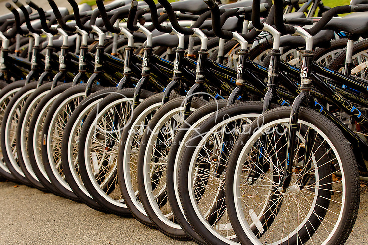 Photography of things to do in Charleston SC. Bikes lined up ready for riders.