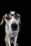 Mixed breed dog wearing glasses<br />