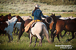 A photo of a working cowgirl gathering horses. Cowboy Photos, riding,roping,horseback