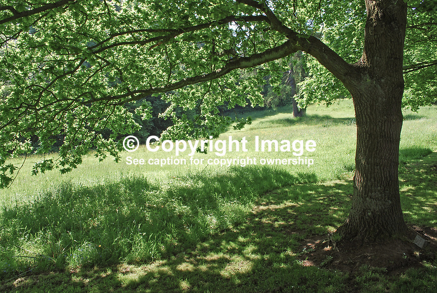 Barnett's Demesne, Malone, Belfast,  N Ireland, UK, parkland, shadows, sunshine, foliage, trees, 200905312526, springtime, early summer, may 2009..Copyright Image from Victor Patterson, 54 Dorchester Park, Belfast, UK, BT9 6RJ..Tel: +44 28 9066 1296.Mob: +44 7802 353836.Voicemail +44 20 8816 7153.Skype: victorpattersonbelfast.Email: victorpatterson@mac.com.Email: victorpatterson@ireland.com (back-up)..IMPORTANT: If you wish to use this image or any other of my images please go to www.victorpatterson.com and click on the Terms & Conditions. Then contact me by email or phone with the reference number(s) of the image(s) concerned.