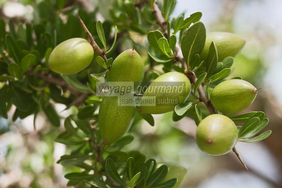 Afrique/Afrique du Nord/Maroc/Env d'Essaouira/Id Choukaïh: Affiaches le fruit de l'arganier, c'est avec sa noix que l'on fait l'huile d'argan