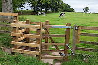 Hadrian's Wall.  A Kissing Gate keeps livestock in the pasture.  Cumbria, England, UK.