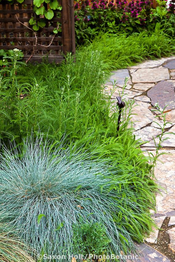 Achillea millefolium (common yarrow) edging stone path with gray foliage fescue grass in California native plant garden