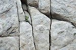 Small plant clinging to a granite cliff face in the Sierra Nevada, Eldorado National Forest, California