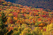 Mount Washington Valley - Forest in Pinkham Notch during the autumn months. Located in Gorham, New Hampshire USA
