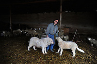 Terremoto del L'Aquila un' anno dopo. Earthquake L'Aquila one year after.Settimio Perilli allevatore di ovini e equini nella sua stalla. .Settimio Perilli farmer of sheep and horses in its stable...