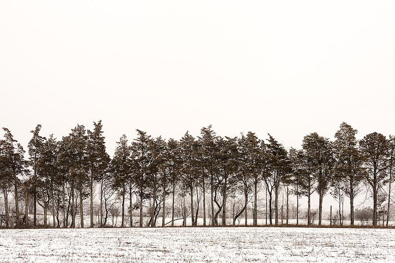 Tree Line<br /> Riverhead, Long Island