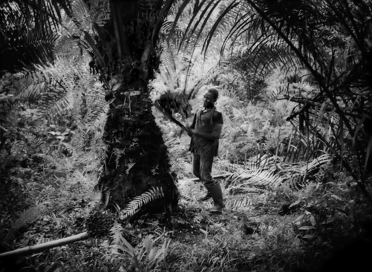 Cameroon: Herakles Farms Oil Palm / Logging Project
