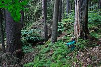 Russia, Caucasus. Photographer Tom Schandy in a forest of fir tree - Nordmann Fir (Abies nordmanniana). Near Dombay.