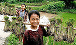 Girls distribute rice seedlings for planting in Sainyabuli Province, Laos.