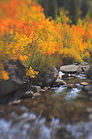 Bishop Creek Middle Fork - Fall Color - Lensbaby