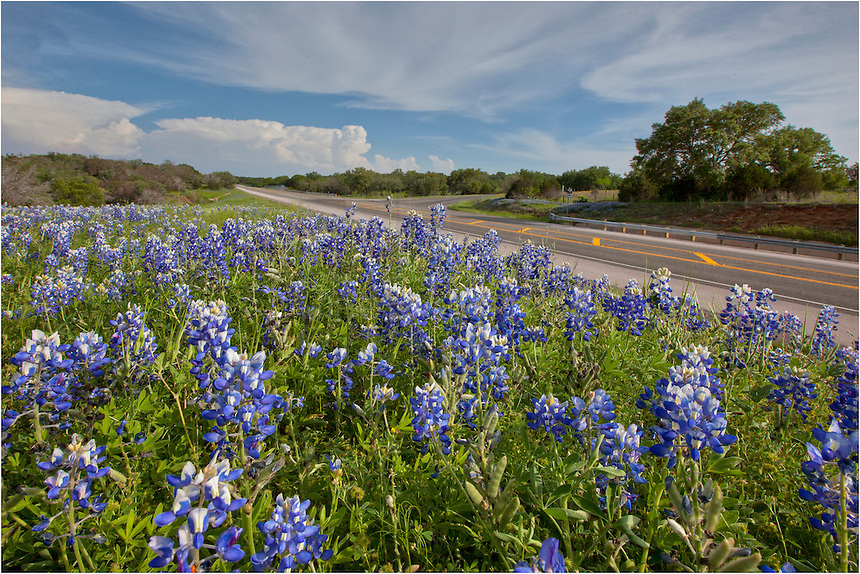 While heading out to the hill country in search of Texas wildflowers, I had to stop along highway 71 outside of Llano. The bluebonnents in the foreground and the storms brewing back over Austin made for a nice scene.