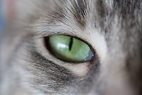 Cats - closeups