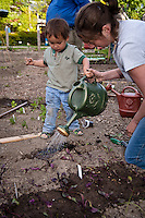 A young boy helps his mother plant tender vegetable seedlings in their community garden plot.